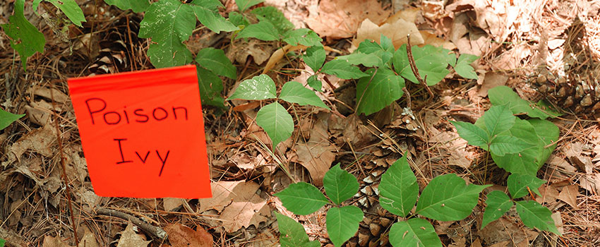 What Should I Do After Coming Into Contact With Poison Ivy?